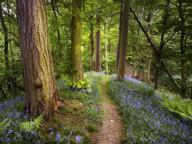 Jigsaw Puzzle Solve jigsaw puzzles online - Path in forest
