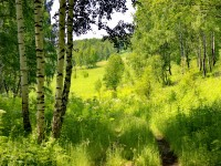 Собирать пазл Path in the woods онлайн