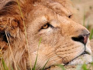 Собирать пазл The king in grief онлайн