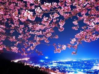 Собирать пазл color of night онлайн