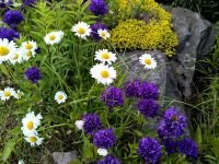 Собирать пазл Flowers on the rocks 1 онлайн