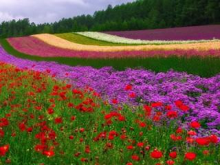Собирать пазл Color spaces онлайн
