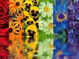 Собирать пазл Floral relax онлайн