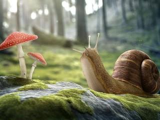 Собирать пазл The snail and the toadstools онлайн