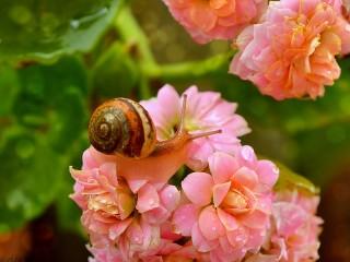 Собирать пазл Snail on flowers онлайн