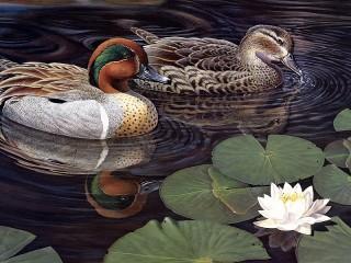 Собирать пазл Ducks онлайн