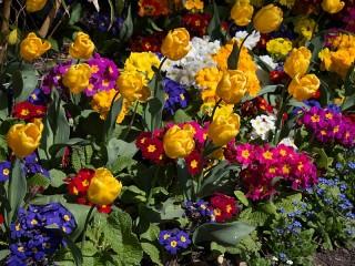 Собирать пазл Spring flowers онлайн