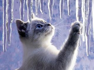 Собирать пазл Spring thaw онлайн