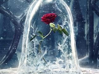 Собирать пазл Magic rose онлайн