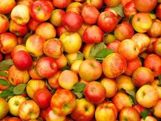 Собирать пазл Plenty of apples онлайн