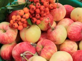 Собирать пазл Fruit and berry онлайн