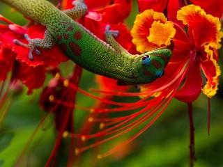 Собирать пазл Lizard on a flower онлайн