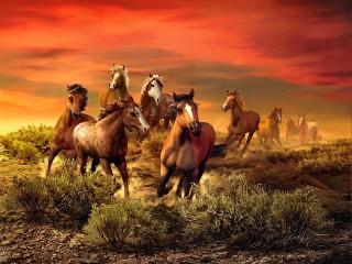 Собирать пазл Sunset and horses онлайн