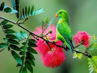 Собирать пазл Green parrot онлайн