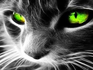 Собирать пазл Green look онлайн