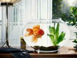 Собирать пазл Goldfish онлайн