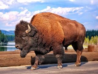 Собирать пазл Bison онлайн